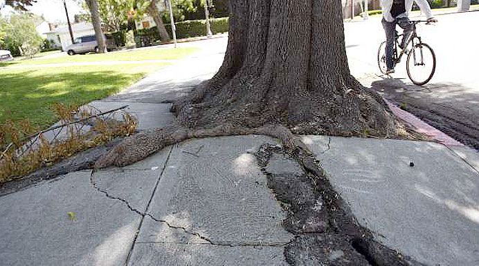 Cracked-sidewalk