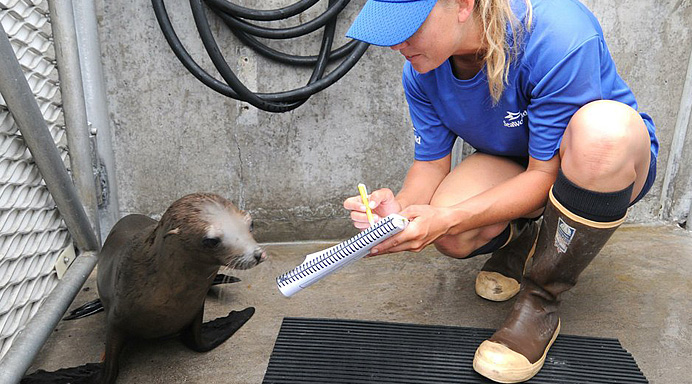 Rescued Sea Lion Pup at SeaWorld