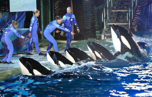 SeaWorld Killer Whales