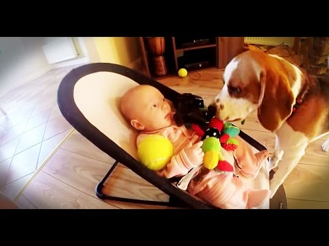 Guilty dog apologizes baby for stealing her toy:It is never too late for apologize for friends.