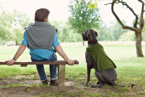 Man sitting in park with Blue Great Dane