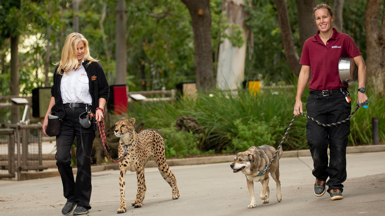 San Diego Zoo shares inside look at parks, where animal care continues