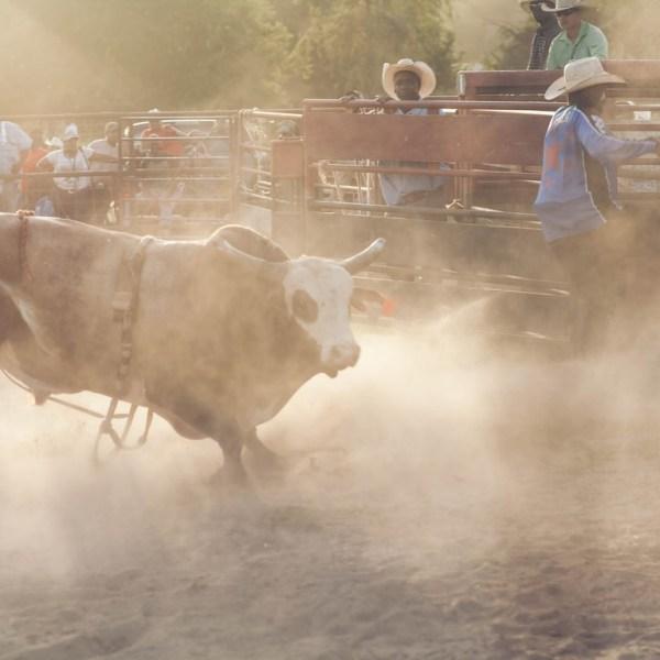 """Director Annie Silverstein talks about her movie """"Bull."""""""