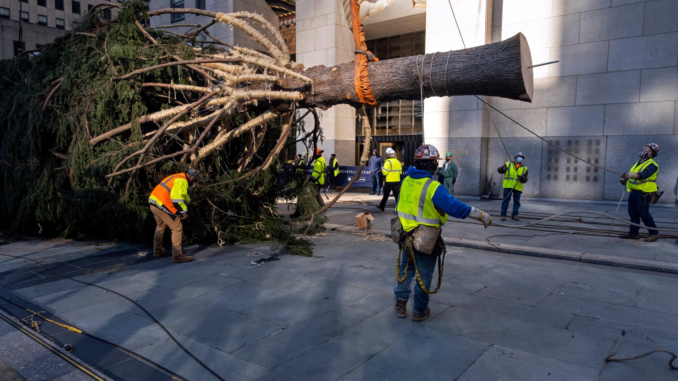 San Diego Christmas Tree Lighting 2020 Rockefeller Center Christmas tree arrives; lighting Dec. 2   FOX 5